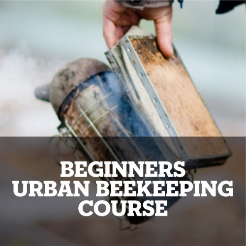 THE Beekeeping course