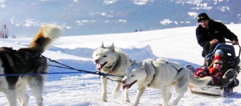 Dog Sledding | Crans-Montana