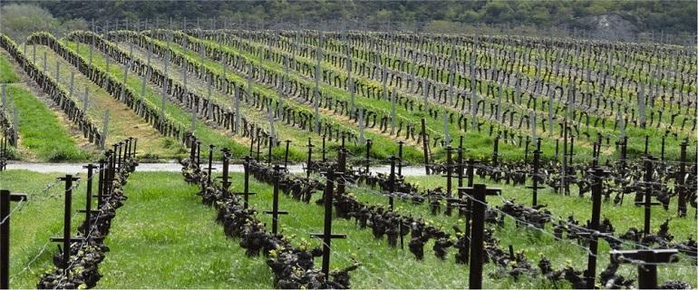 Valais Wine Tours | Crans-Montana