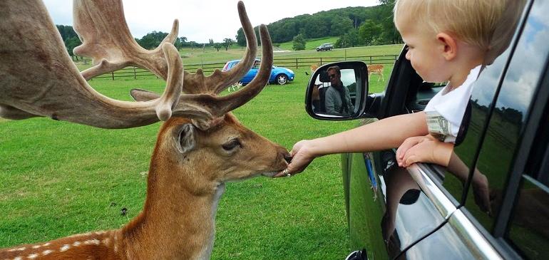 Longleat Safari Park | Wiltshire
