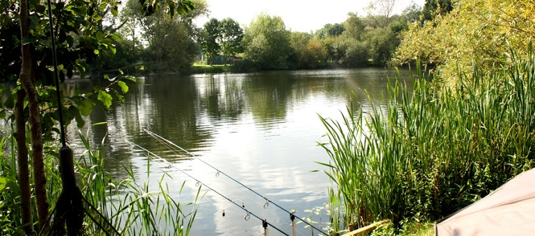 Thorney Lake Fishing | Somerset