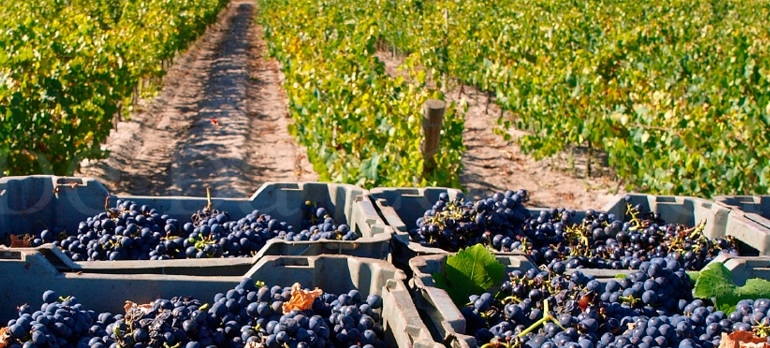 Wine Tour I Portugal