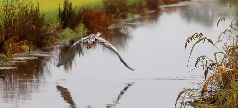 Bird & Nature I Portugal