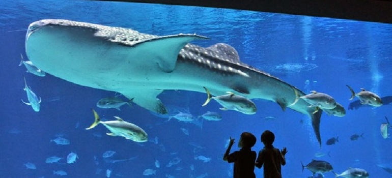 Longisland Aquarium I USA