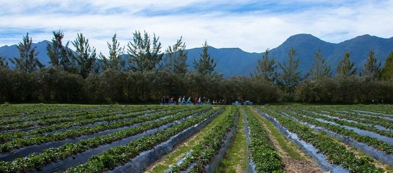 Redberry Farm I South Africa