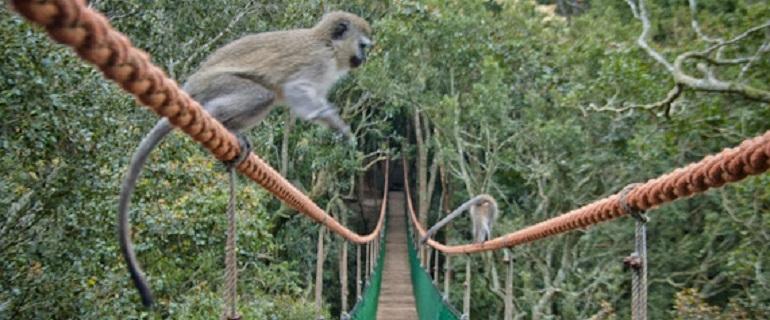 Monkeyland I South Africa