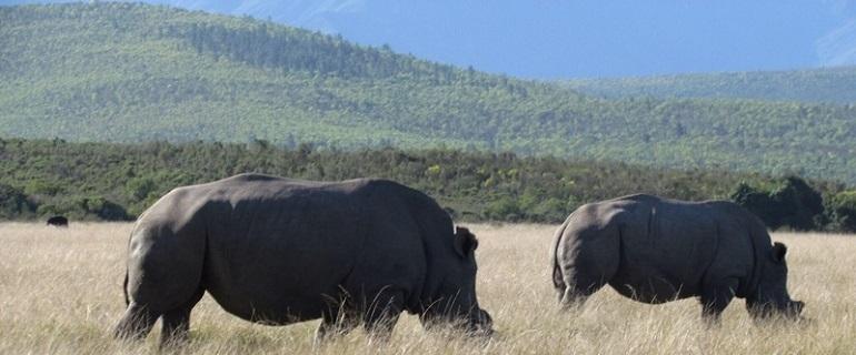 Rhino Base Camp I South Africa