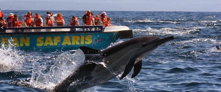Ocean Safari I South Africa