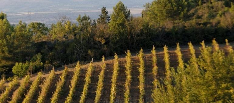 O'Vineyards I South France