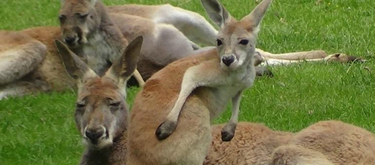 Wildlife Australien park  I South France
