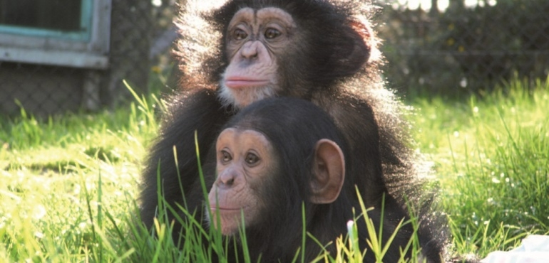 Monkey World | Dorset