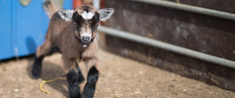 Abbotsbury Childrens farm | Dorset