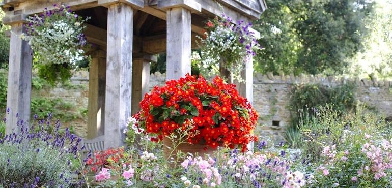 Abbotsbury Gardens | Dorset